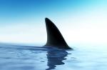Shark_EDITED